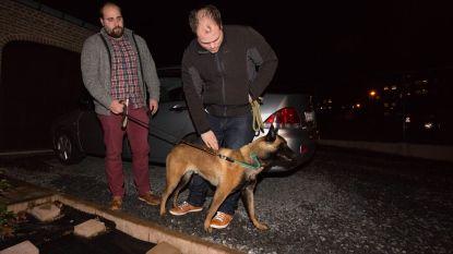 Hond loopt speelplaats op in Paal: twaalf kinderen gewond