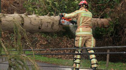 Brandweer krijgt heel wat oproepen voor stormwind maar nergens grote schade