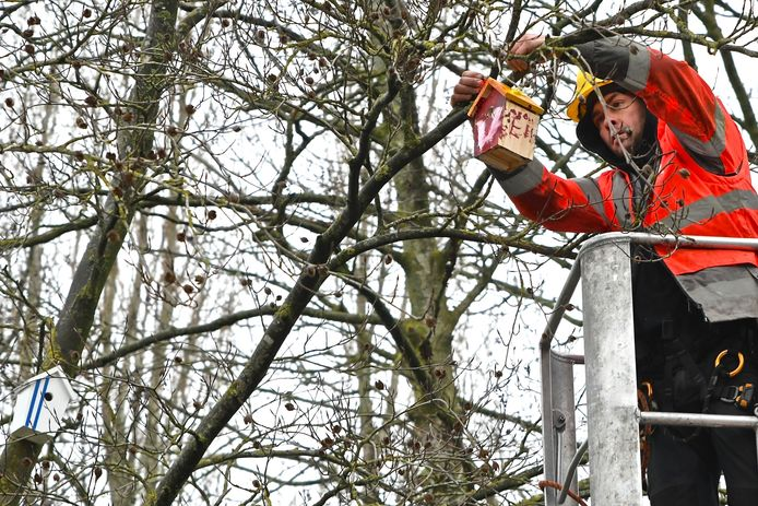 De nestkastjes werden deze ochtend in de bomen gehangen.