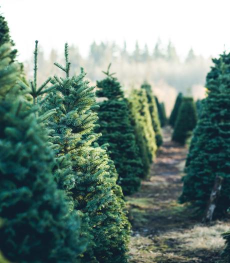 Pikdonkere dagen in aanloop naar een groene kerst met zacht weer