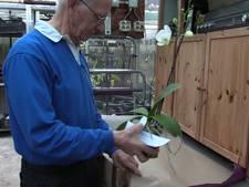 Koos (84) heeft meer dan 4000 orchideeën