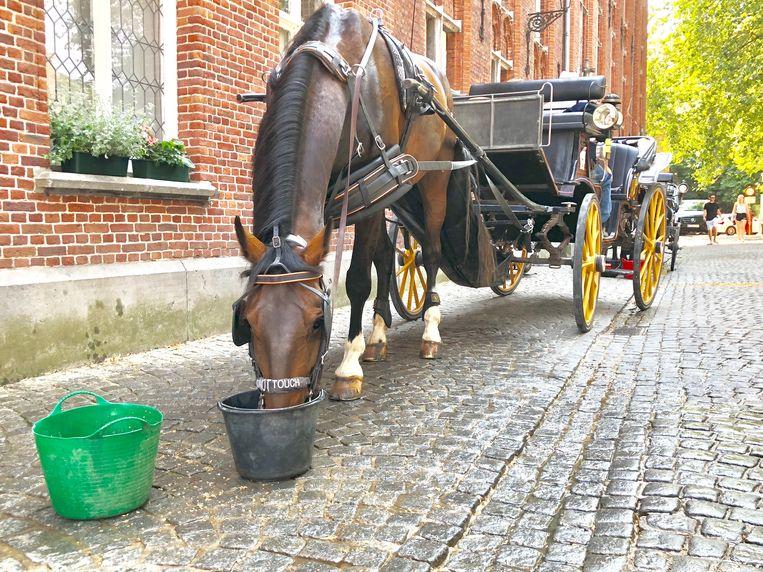 Paarden rijden deze week alweer minder in Brugge, door de hitte.