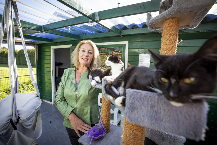 Directeur Liesbeth van Hoorik bij haar kattenasiel
