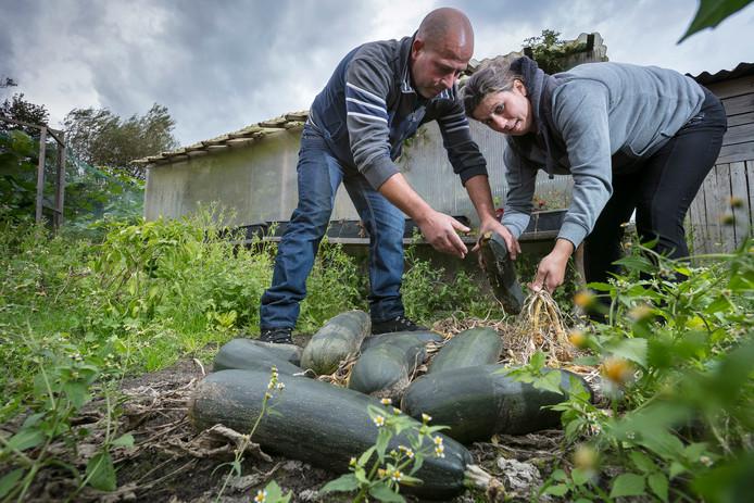 Abilio en Mara bezig met hun laatste oogst in hun moestuintje.
