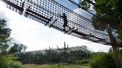 Planckendael uitgeroepen tot 'meest kindvriendelijke zoo'