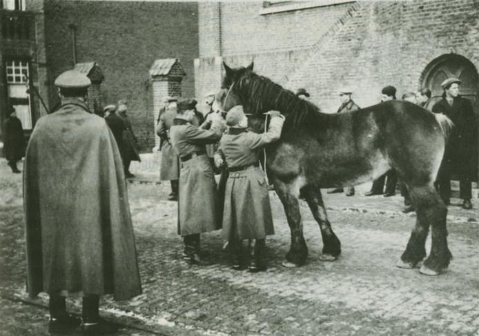 Vordering van paarden begin februari 1941 in Aardenburg. G.A.S., Collectie G.A.C. van Vooren.