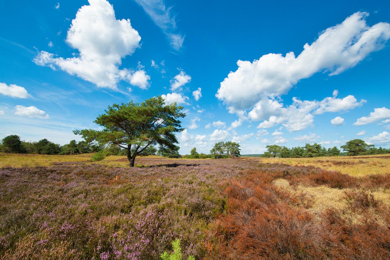 Pas als de neerslag van stikstof onder de afgesproken waarde zit, dan loopt de kwetsbare natuur, zoals hier op de Veluwe bij Hoog Soeren, geen risico.
