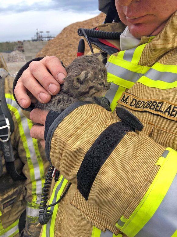Het kleine katje na de brand donderdag.