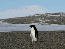 Cette solution insolite contre la fonte de l'Antarctique