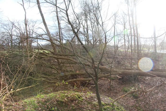 Het half omgewaaide bos met zicht op de westzijde, waar het nieuwe N18-trace ervoor heeft gezorgd dat de oorspronkelijke bosrand moest worden gerooid.