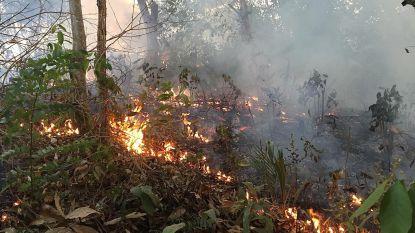 Alweer honderden nieuwe bosbranden in Amazonewoud, 44.000 militairen inzetbaar