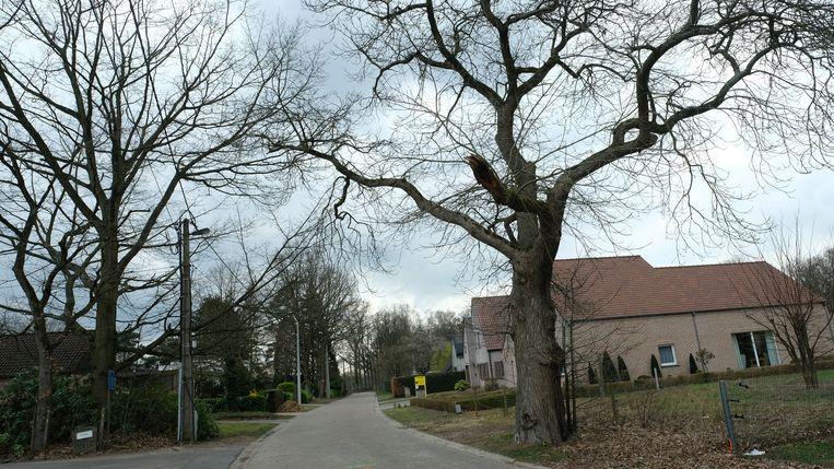 Na het aanpassen van de plannen mag deze oude kastanjeboom (rechts) toch blijven staan.