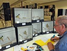 Show van 600 gevleugelde juweeltjes in Hulst. 'Ze worden vertroeteld'