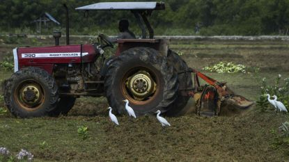 Speelbos tijdens Brielstroate omgetoverd tot boerderij
