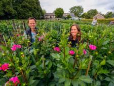 Oerlese dahliavereniging Groen en Keurig in Veldhoven staat in volle bloei dankzij dertigers