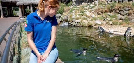 Dieren in Arnhemse zoo redden het zonder code oranje