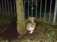 Onderkoelde hond gered in Eibergen