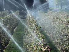 Nog steeds te weinig water, maar boeren mogen weer beregenen