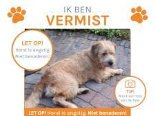 Grote zoekactie naar ontsnapte hond Guus, kilometervreter zit langs de N279