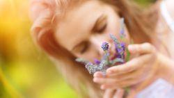 Kalmerend effect van lavendelgeur is waarschijnlijk meer dan oude volkslegende