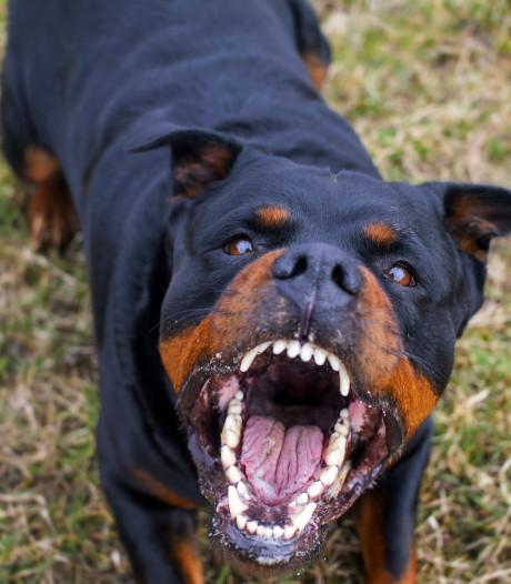 Stichtse Vecht muilkorft hond ook op privéterrein