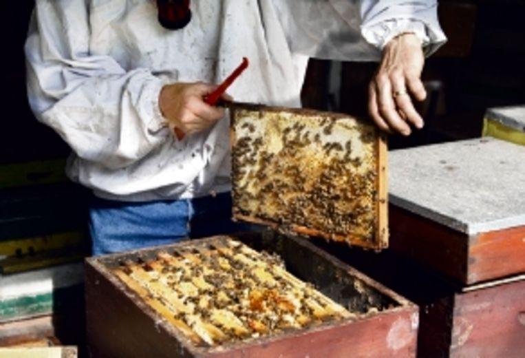 Een bijenvolk produceert tien kilo honing per jaar. (FOTO'S MAARTEN HARTMAN) Beeld