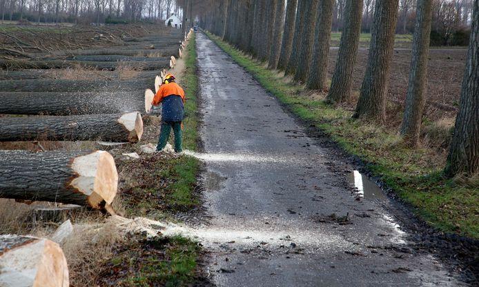 Bomenkap in de Hedwigepolder in 2019, als voorbereiding op de teruggave van de polder aan de natuur.