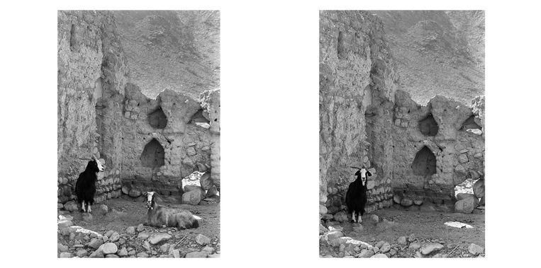 Geiten in Oman in 1981. Beeld Eddy Posthuma de Boer