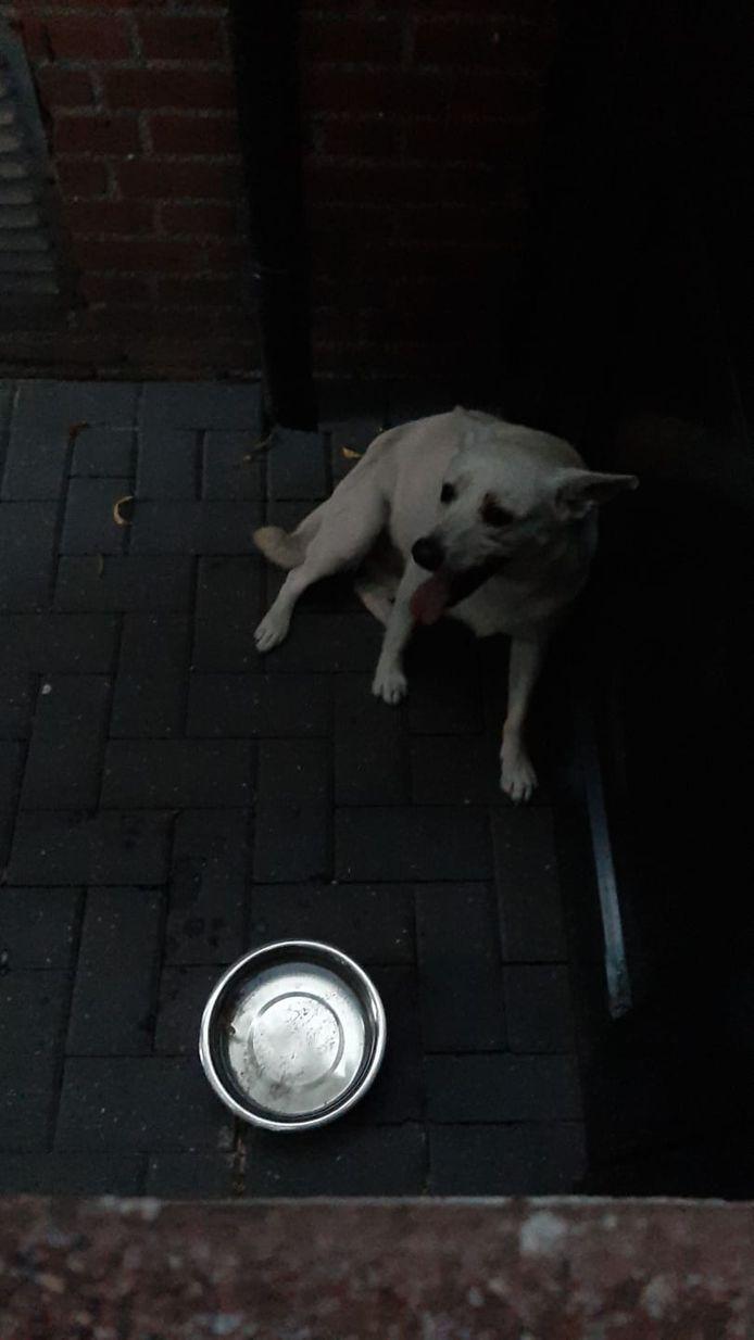 De hond werd gevonden bij een woning aan de Mierloseweg