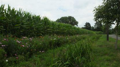 Landbouwers zorgen voor bloemenpracht langs de weg