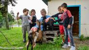 Maak kennis met Marie, Vlekje en Blakkie: De geitjes die de leerlingen van basisschool Dorp voortaan gezelschap houden