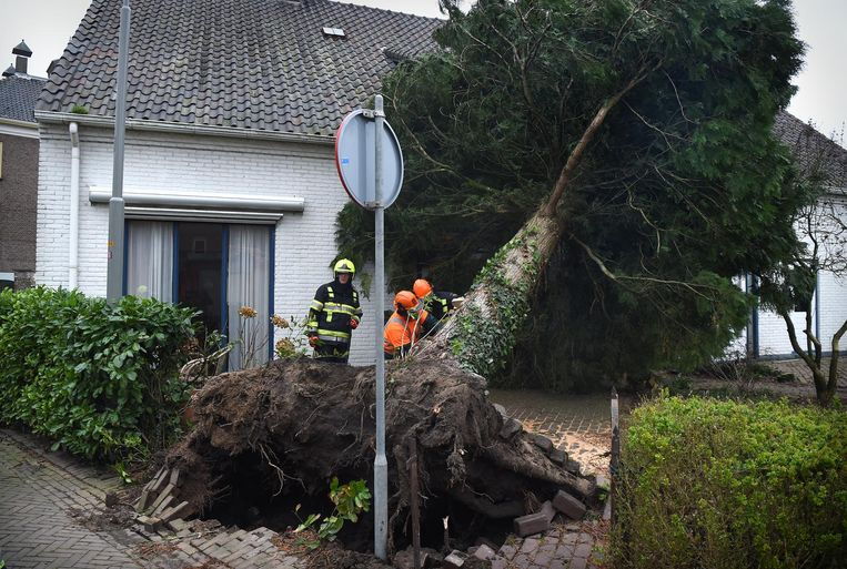 Een boom is op een huis gewaaid in Wamel Beeld Marcel van den Bergh / de Volkskrant