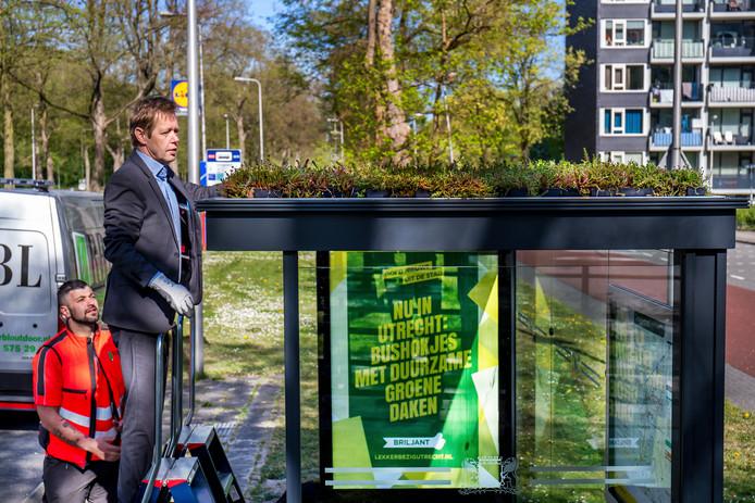 Wethouder Kees Diepeveen plaatst een vetplantje op het eerste groene bushokje aan de Carnegiedreef.