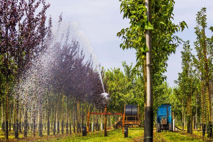 Het besproeien van de bomen op een van de percelen van Boomkwekerij M. van den Oever in Haaren.