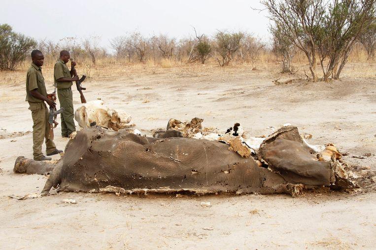 De olifanten stierven in Hwange National Park, de meeste van hen in de buurt van opgedroogde waterputten.