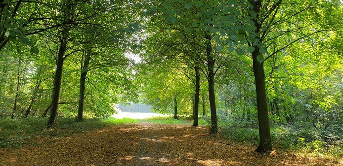 Het beheer van het Plantenbos in Steenderen wordt gedaan door agrarische natuurvereniging 't Onderholt en Het Steenders Landschap.