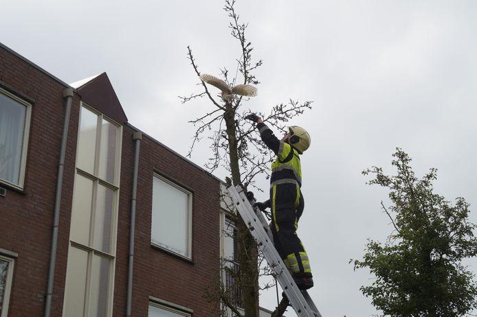 Brandweer redt uil uit een boom in Drunen.