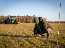 Gebroeders Smetsers uit Oostelbeers behoeden kievitsnestjes voor landbouwmachines