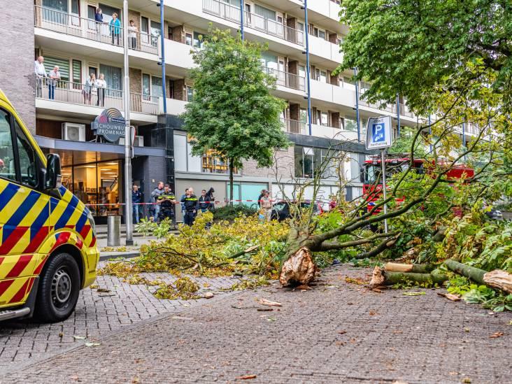 Oudere vrouw gewond door vallende boomtak in centrum van Tilburg: 'Ging rakelings langs haar hoofd'