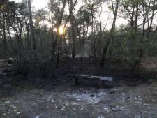 700 vierkante meter én houten bankje ten prooi aan bosbrand in Oss