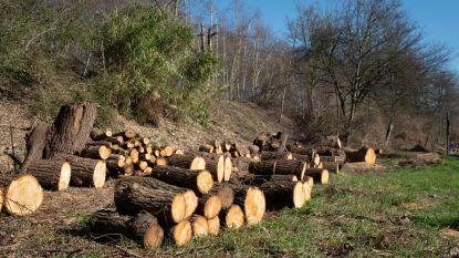 """Gemeente haalt hakbijl boven: """"Bomenkap moet van 'Den Berm' volwaardig natuurlijk park maken"""""""