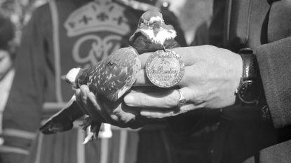Snavel vol ijzer helpt duiven weg te vinden