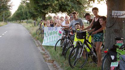 """Groen en actiecomité blijven zich verzetten tegen grootschalige kap: """"Bedreigde lindes in Veldkantstraat zijn beschermd"""""""