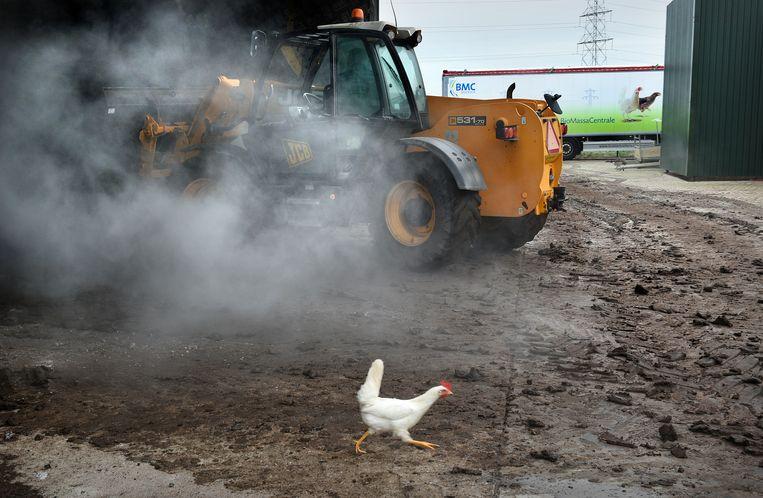 Zelfs kippenmest kan dienen als biomassa om energie mee op te wekken. Beeld Marcel van den Bergh / de Volkskrant