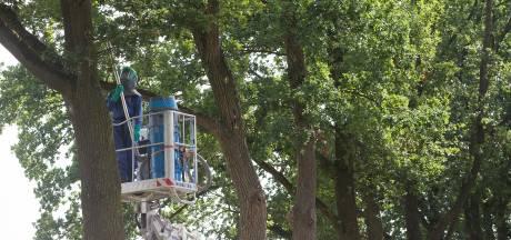 In paarse overall speuren naar nesten van de jeukrups: 150 nesten in elf bomen