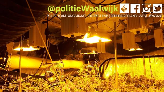 Hennepkwekerij van 200 planten aangetroffen in een woning in Waalwijk.
