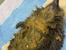 Arnhemse egel met pindakaas-massage verlost van lijmpoten bij Nijmeegse dierenkliniek