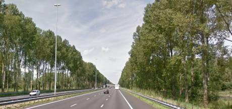 Karakteristieke bomen langs A2 bij Best worden gekapt