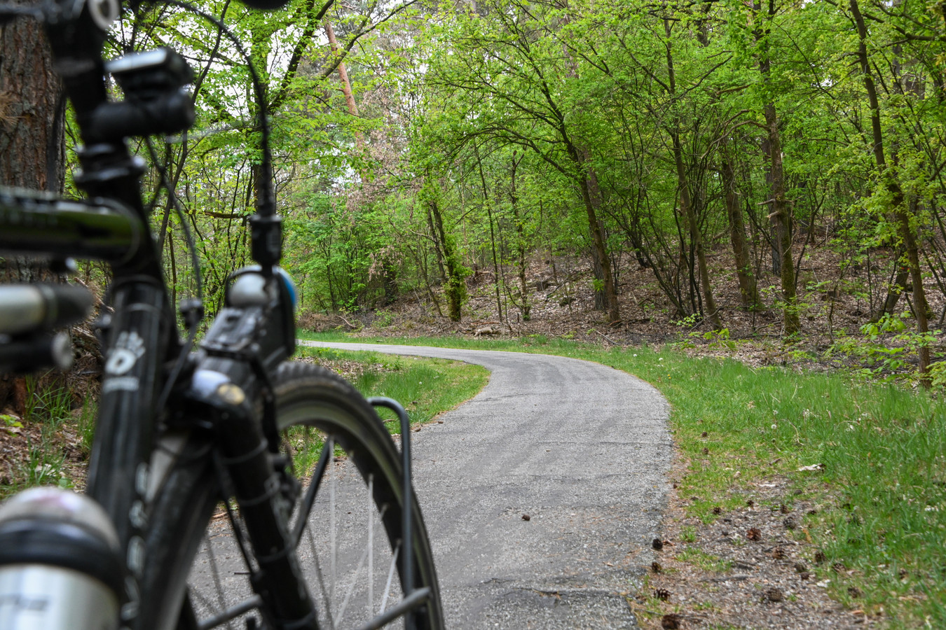 De Gerard Vethlaan. Een fietspad in het bos 20 centimeter breder maken? De gemeente Nunspeet wil het, maar het mag (nog) niet van de provincie.