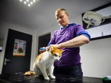 Gratis chip voor Nissewaardse katten